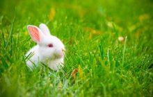 ایستاده بودن گوش خرگوش به چه معناست